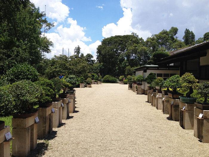 Pavilhão Japonês - Parque do Ibirapuera