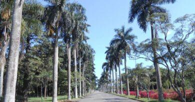 Palms at the São Paulo Botanical Garden