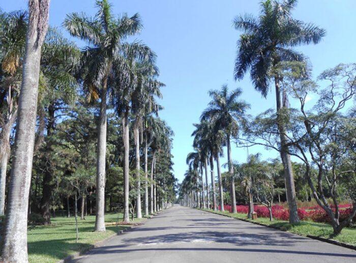 Jardim Botânico de São Paulo - Alameda das Palmeiras