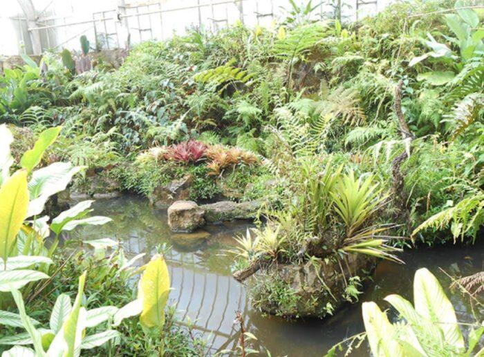 Jardim Botânico de São Paulo - Estufa