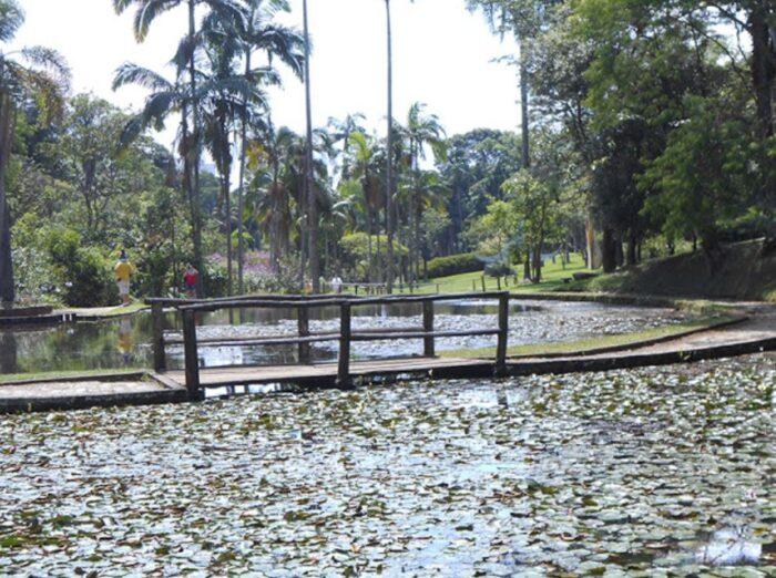 Jardim Botânico de São Paulo - Lago das Ninféias