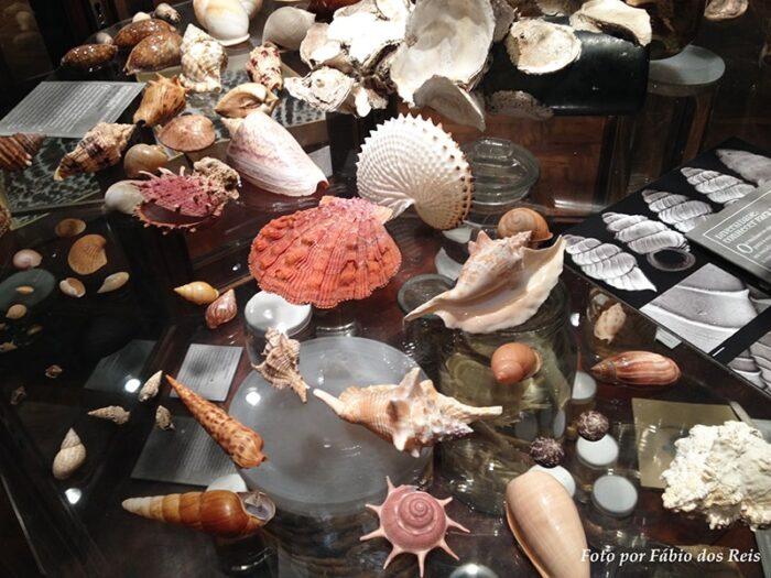 Conchas no Museu de Zoologia da USP