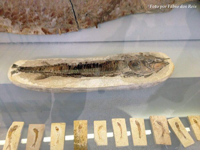 Coleção de Fósseis variados de peixes