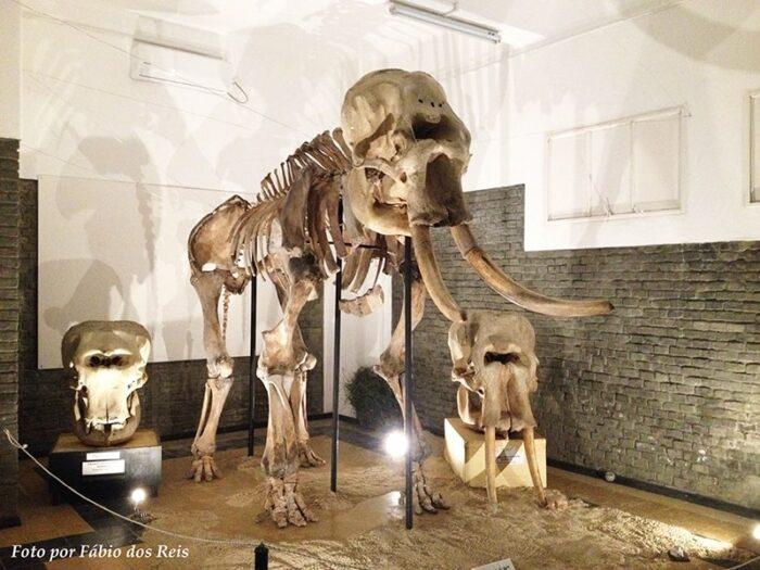 Esqueleto de Elefante