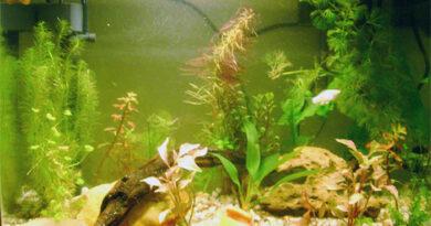 Aquário de peixes ornamentais
