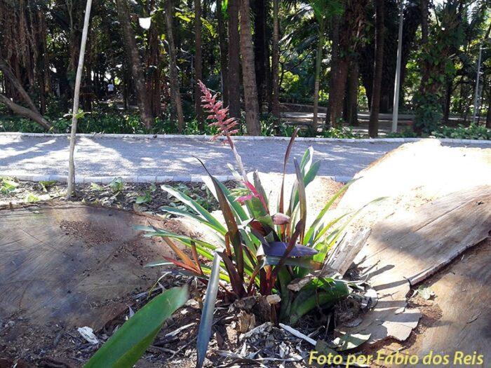 Bromélia no Parque Celso Daniel
