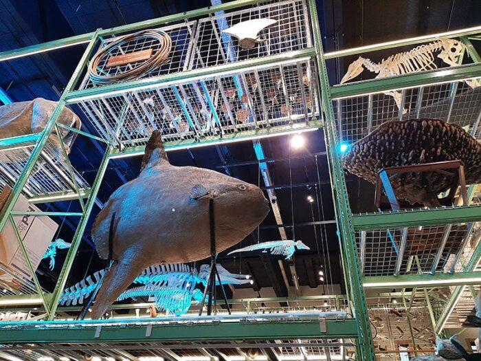 Diversos modelos de animais em exposição