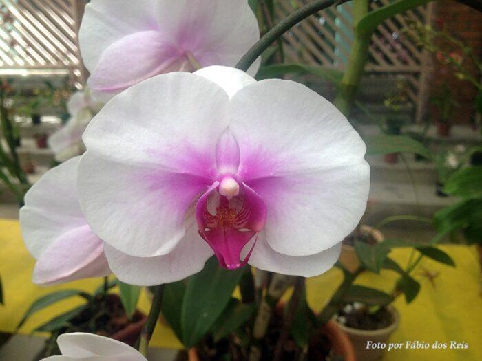 Uma das muitas orquídeas expostas no orquidário
