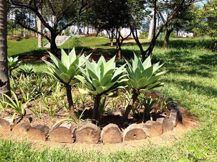 Canteiro de Plantas no Parque Ecológico de Vila Prudente