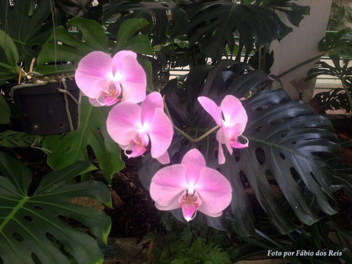 Mais orquídeas