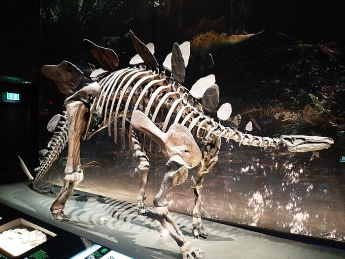 Esqueleto de Estegossauro