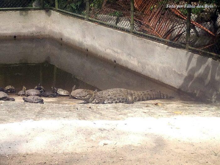 Animais no Orquidário de Santos - Jacaré e Tartarugas