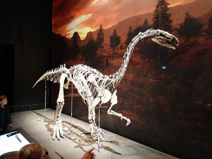 Esqueleto de dinossauro Plateosaurus