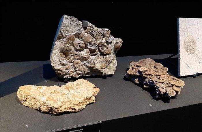 Fósseis de Trilobitas e Amonitas