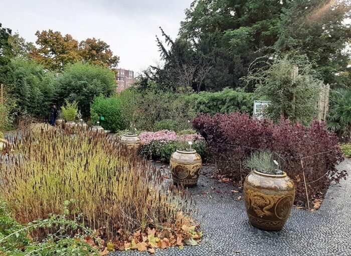Jardim de Ervas Chinês no Hortus Botanicus de Leiden - Holanda
