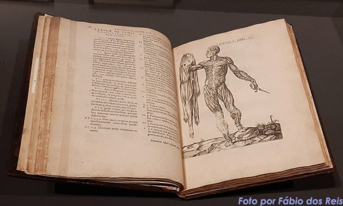 Vivae imagines corporis humani (Valverde / Vesalius)