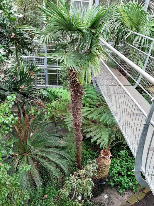 Plataforma suspensa na Estufa do Hortus Amsterdam