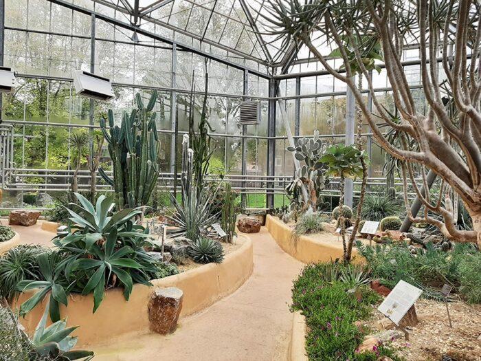 Estufa com plantas do deserto, cactáceas e suculentas