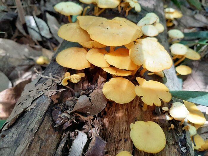 Fungos crescendo em um tronco de árvore caído. Jardim Botânico de São Paulo.