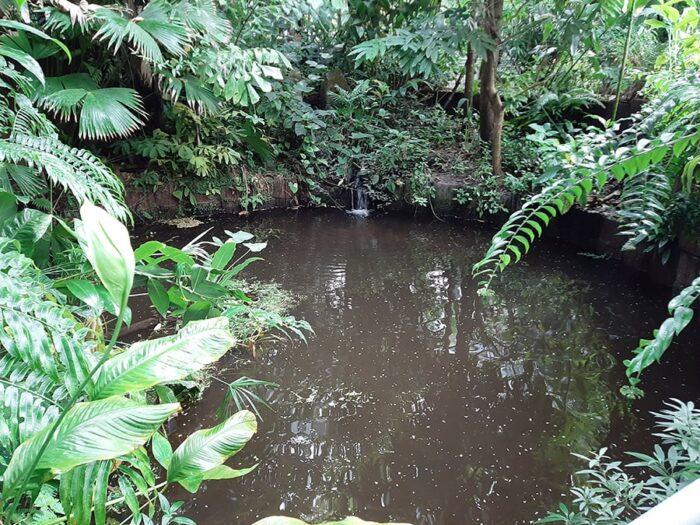 Lago na estufa tropical do Hortus Botanicus Amsterdam