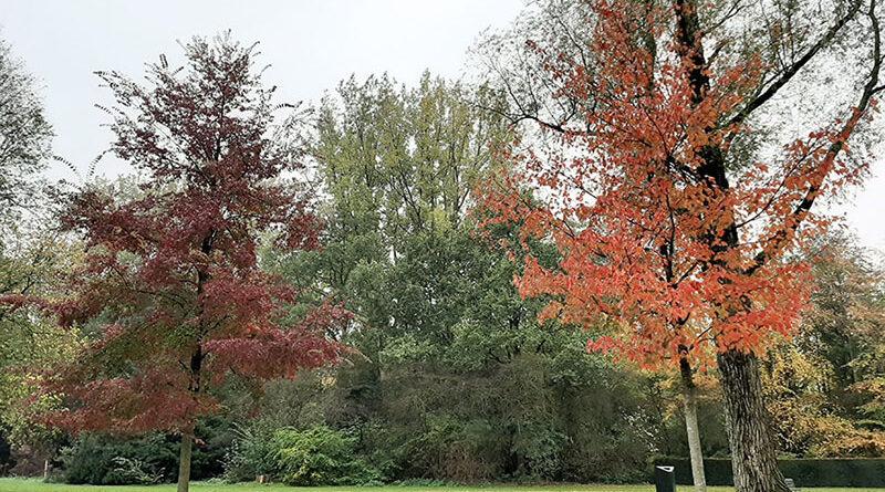 Árvores com cores de outono no Amstelpark em Amsterdã, Holanda