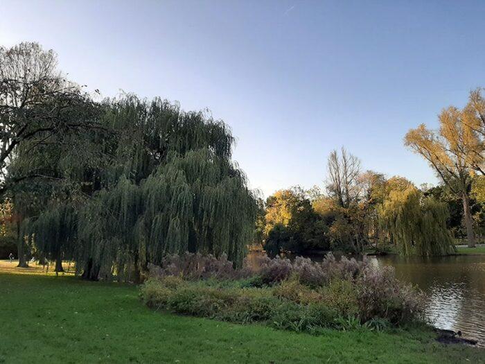 Árvores à beira do lago no Osterpark. Em destaque, um Chorão